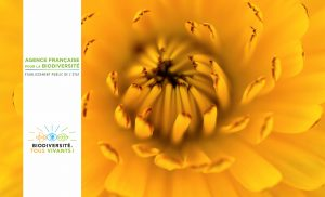 AFB festival biodiversite